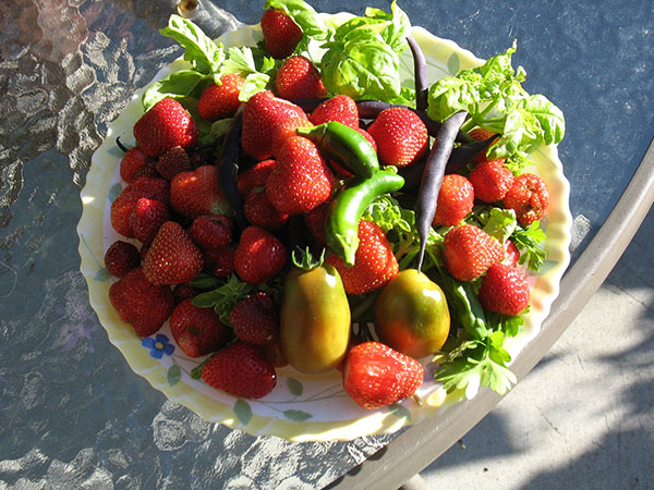 Strawberry Pickings And Other Things